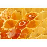 Продам мёд с личной пасеки