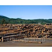 Общий запас древесины РФ составляет 83,1 млрд м3 фотография
