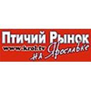 «Птичий рынок на Ярославке»