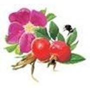 Плодово-ягодные и декоративные кустарники Подмосковья