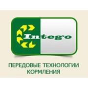 Интего Трейд, ООО