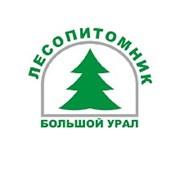 """Питомник растений """"Большой Урал"""""""