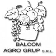 Balcom Agro Grup, SRL