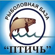 Рыбная база Птичь, ООО