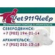 Ветеринарная помощь 911