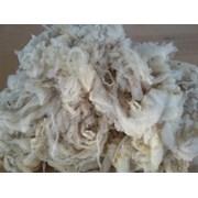 Оптовая продажа овечьей шерсти