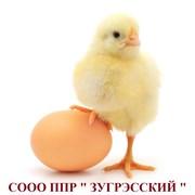 "СООО ""ППР ЗУГРЭССКИЙ"""