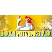 КФХ Туртурика Р.Ф., ЧП