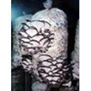«Евро-мицелий»