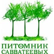 Питомник Савватеевых, ООО