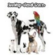 Интернет-магазин зоотоваров «Fendi-Grace»