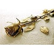 ООО «Золотая Роза»
