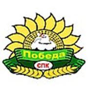 Логотип компании СПК ПОБЕДА (Москва)