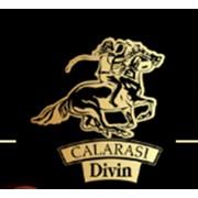 Calaras Divin (Калараш Дивин), SA
