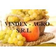 Vindex-Agro, SRL