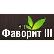 Фаворит - III, ЧП