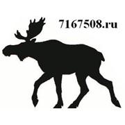Лосев, ООО