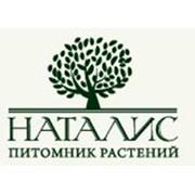 Питомник растений Наталис, ООО