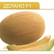Семена дыни Делано F1 (1000 cемян)  фото