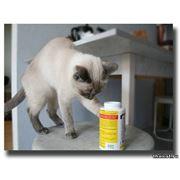 Витамины для кошки фото