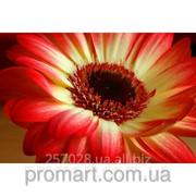 Фотокартина Червоно-жовта квітка код КН-097 фото