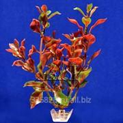 Растение пластиковое Людвигия красная 20 см фото