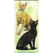 Уральский рекс аборигенная порода кошек с кудрявой шерстью фото