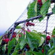Сетки для защиты растений фото