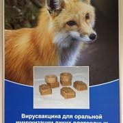 Вирусвакцина для оральной иммунизации диких плотоядных животных против бешенства «Рабивак-О/333» фото