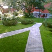 Озеленение домов. фотография