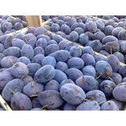Слива свежая на экспорт из Молдовы фото