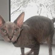 Древесный наполнитель (гранулы) для домашних животных: котов, грызунов фото