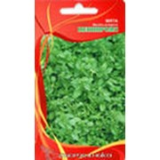 Семена пряно-ароматических трав фото