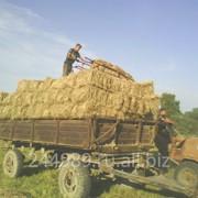 Сено сеяных трав в брикетах весом 20 кг фото