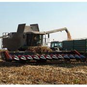 Жатки для уборки кукурузы Dominoni фото