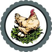 Солотвинская птицефабрика продает яйца куриные фото