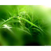 Селекция сельскохозяйственных культур фото