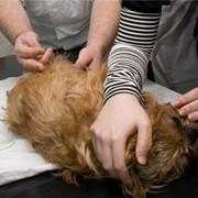 Вакцины для профилактики болезней собак