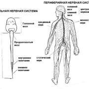 Лечение заболеваний периферической нервной системы фото