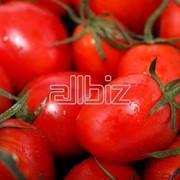 Свежие помидоры оптом фото