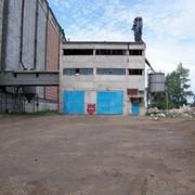 Калибровка Подсолнечника фото