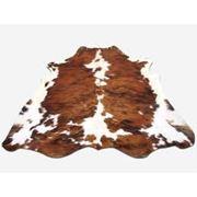 Шкуры крупного рогатого скота солено- мокрые. фото