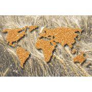 Экспорт зерновых Молдова фото