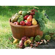 Выращивание фруктов орехов и других культур фото