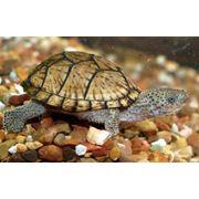 Животные для аквариумов фото