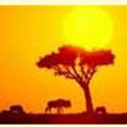 Туры по Африке фото