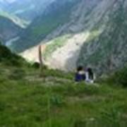 Туры по заповеднику Аксу-Джабаглы фото
