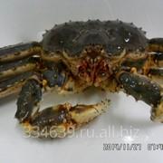Живые морепродукты фото