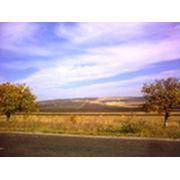 ферма фото