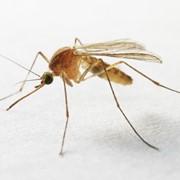 Услуги по уничтожению комаров фото
